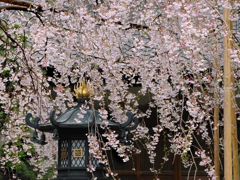 鎌倉の名所で春の写真撮影!